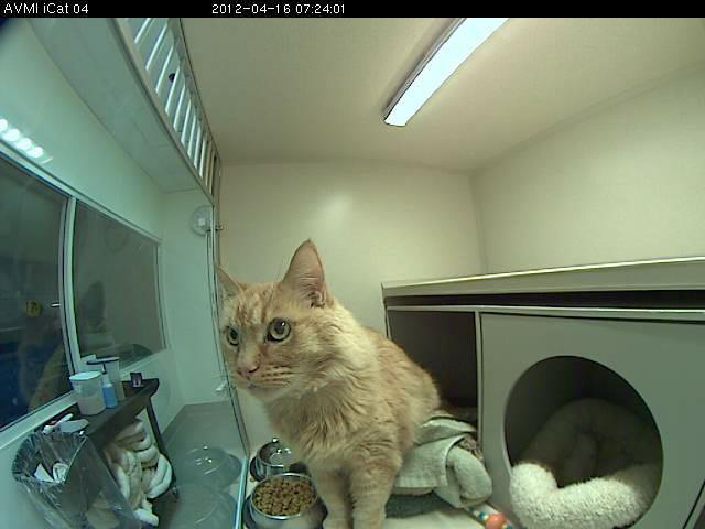Holly on his iCat cam, checking out his cottage
