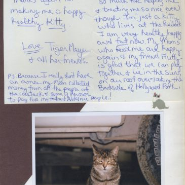 """""""Thanks for making me a happy, healthy kitty"""""""