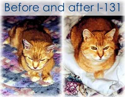 Cat Hyperthyroidism Treatment Natural