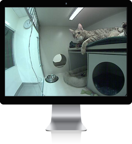 AVMI Updates Website and Improves iCat Webcams