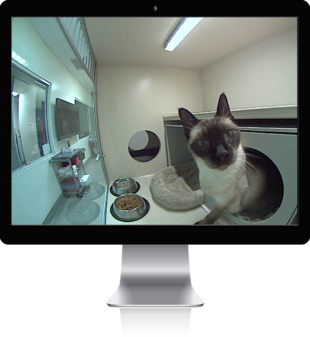 iCat webcams