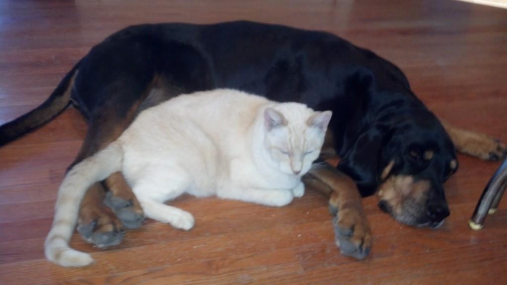 Rascal & Molly