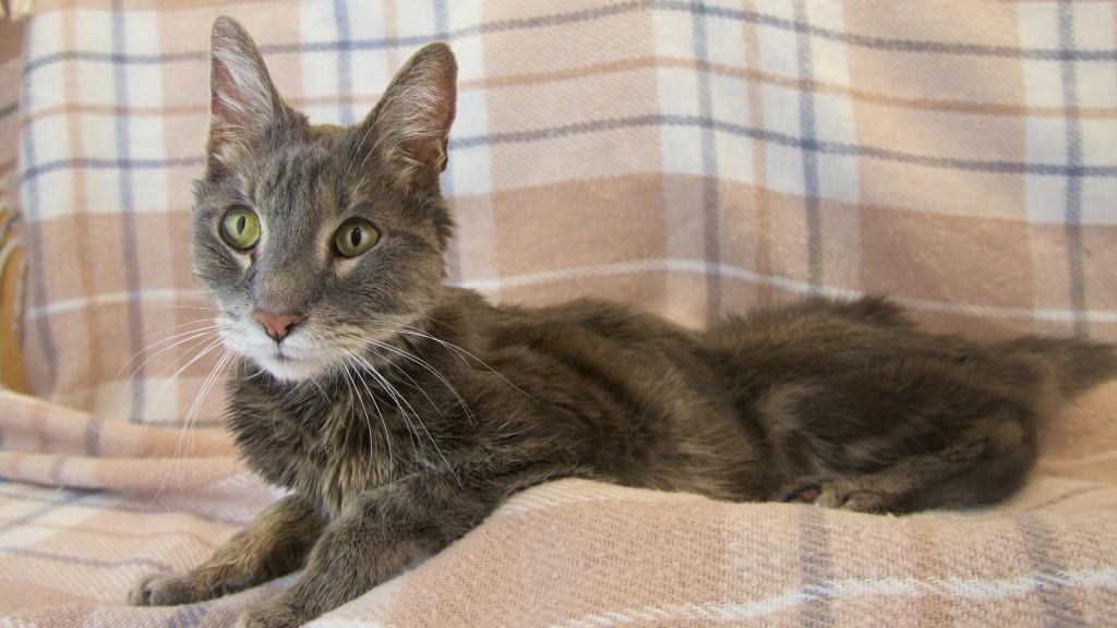 What Should I Feed My Hyperthyroid Cat Advanced